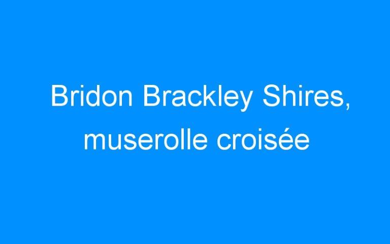 Bridon Brackley Shires, muserolle croisée