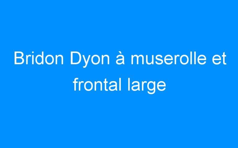 Bridon Dyon à muserolle et frontal large