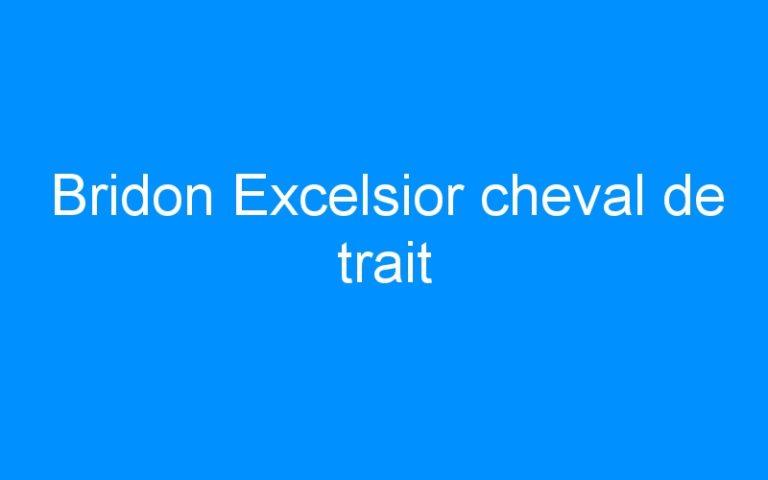 Bridon Excelsior cheval de trait