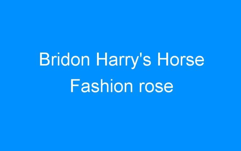 Bridon Harry's Horse Fashion rose