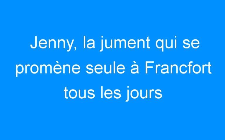 Jenny, la jument qui se promène seule à Francfort tous les jours