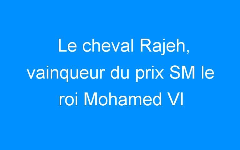 Le cheval Rajeh, vainqueur du prix SM le roi Mohamed VI