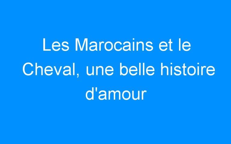 Les Marocains et le Cheval, une belle histoire d'amour