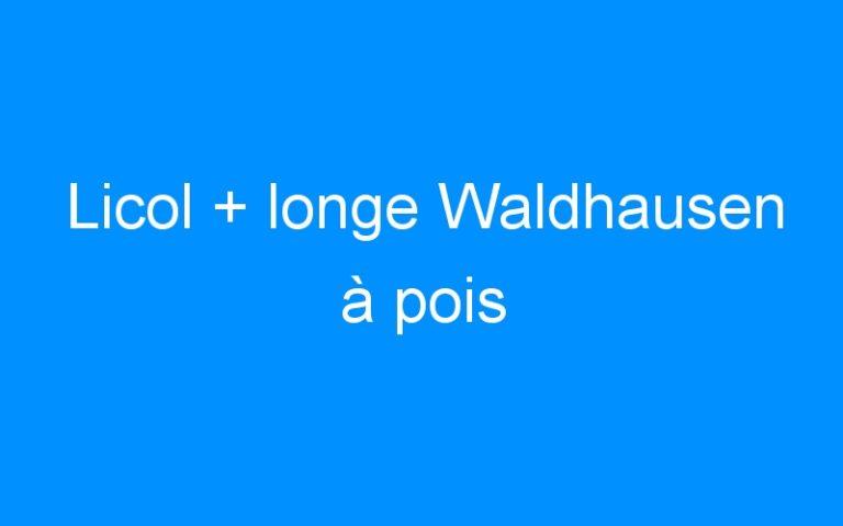 Licol + longe Waldhausen à pois