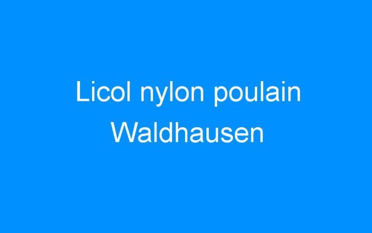 Licol nylon poulain Waldhausen