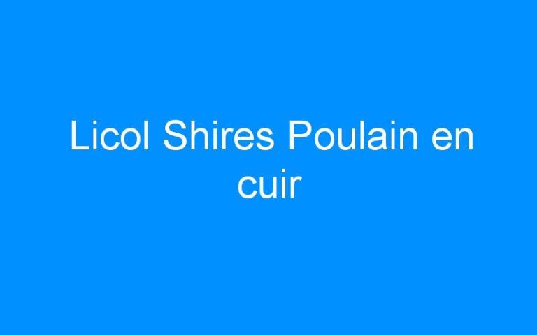 Licol Shires Poulain en cuir